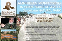 Amphibian monitoring in Sierra Norte De Sevilla (Andalusia) Natural Park